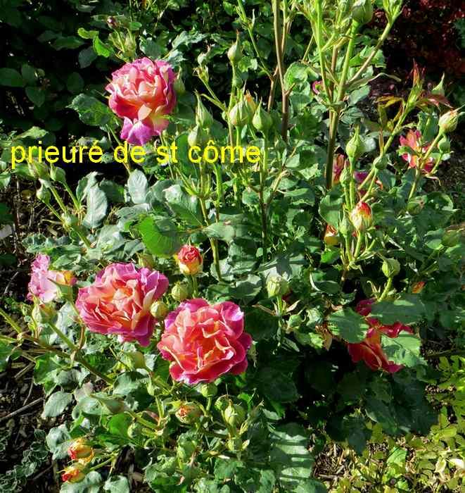 roses en vrac - Page 3 Img_4762