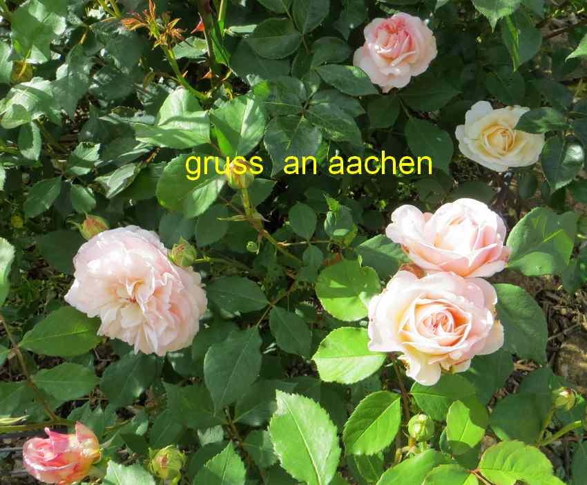 roses en vrac - Page 3 Img_4763