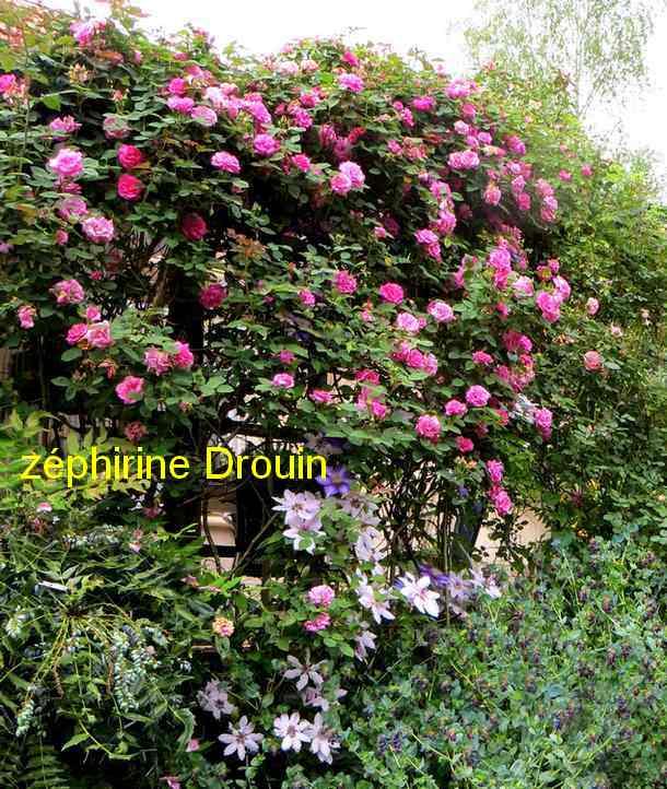 roses en vrac - Page 9 Img_4765