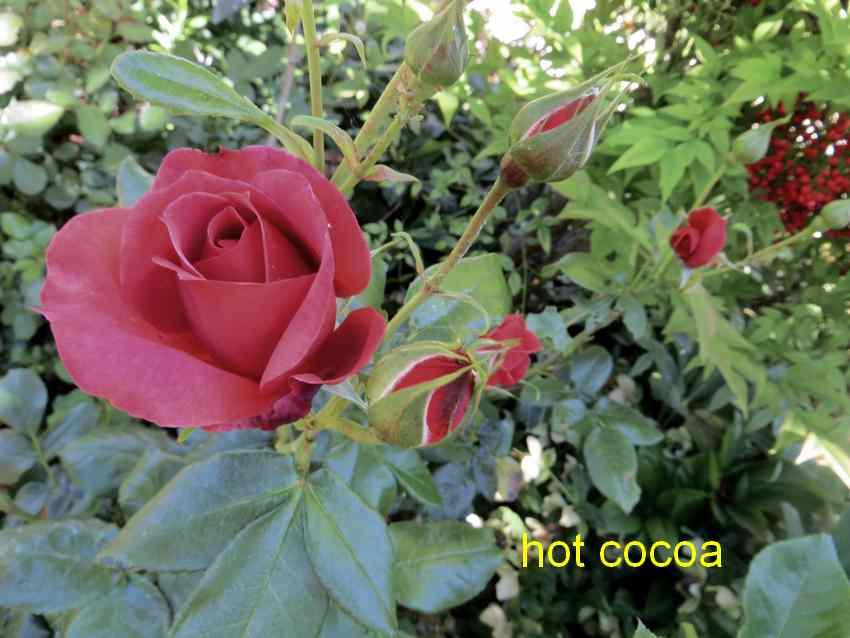 roses en vrac - Page 3 Img_4812