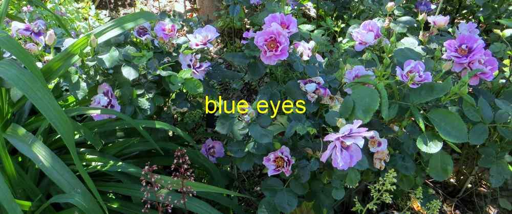 roses en vrac - Page 3 Img_4813