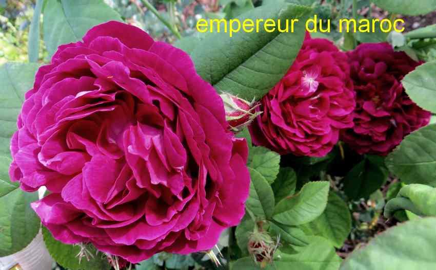roses en vrac - Page 3 Img_4814
