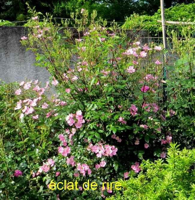 roses en vrac - Page 3 Img_4818