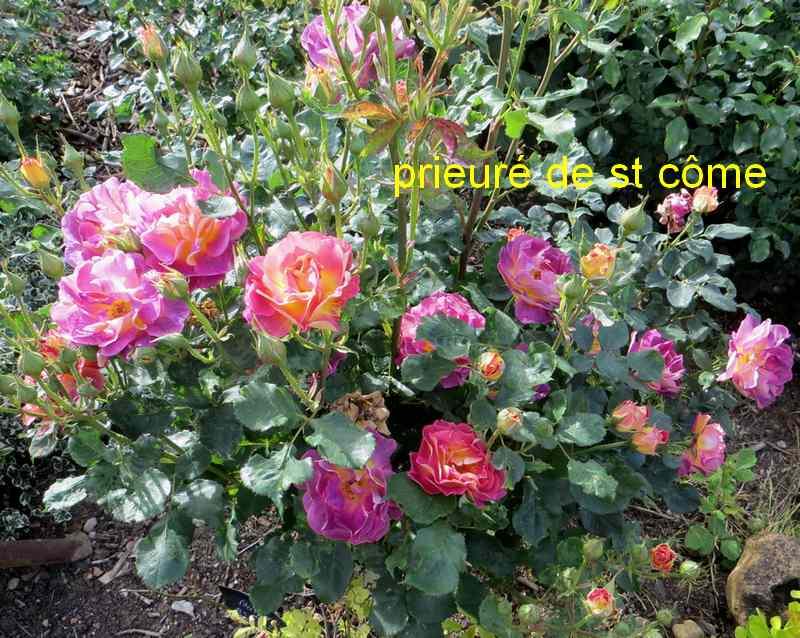 roses en vrac - Page 3 Img_4819