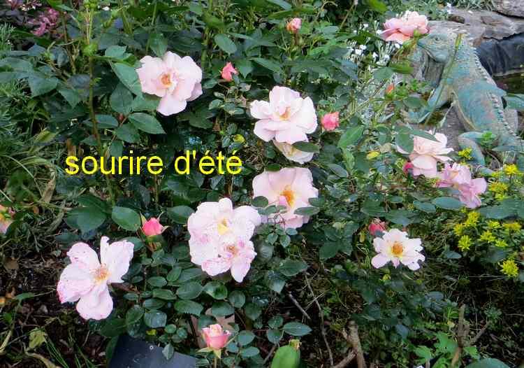 roses en vrac - Page 4 Img_4827
