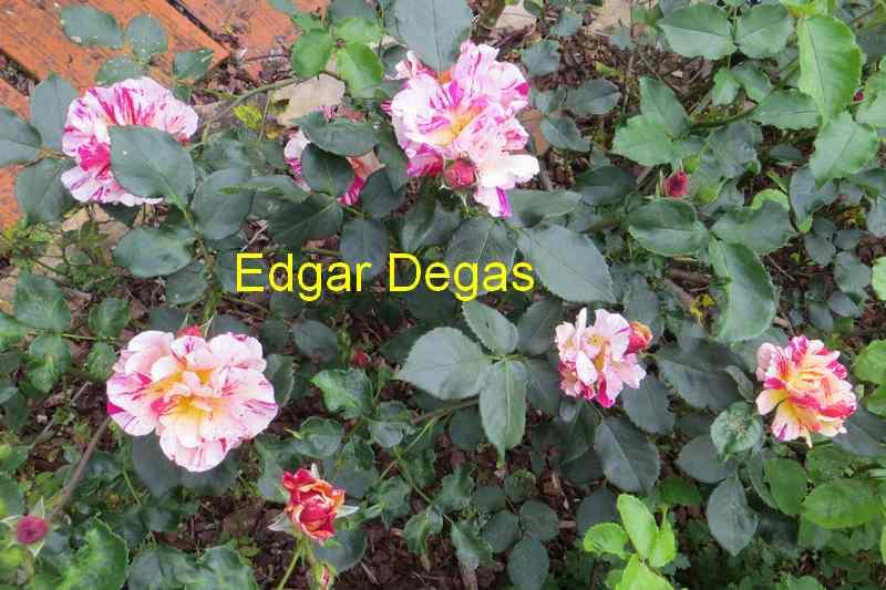 roses en vrac - Page 4 Img_4828