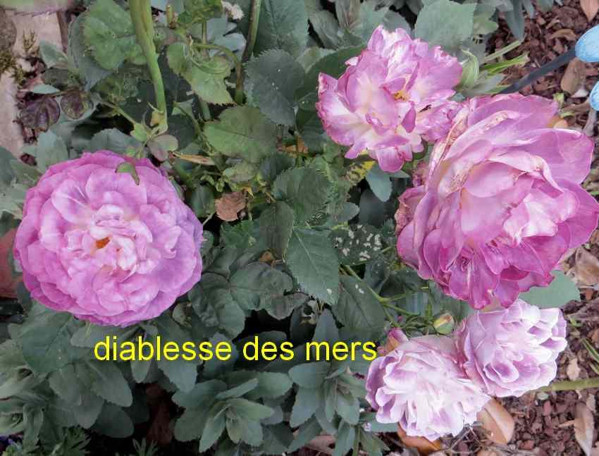 roses en vrac - Page 4 Img_4829