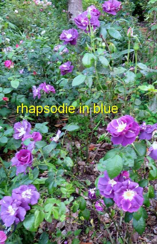 roses en vrac - Page 4 Img_4832