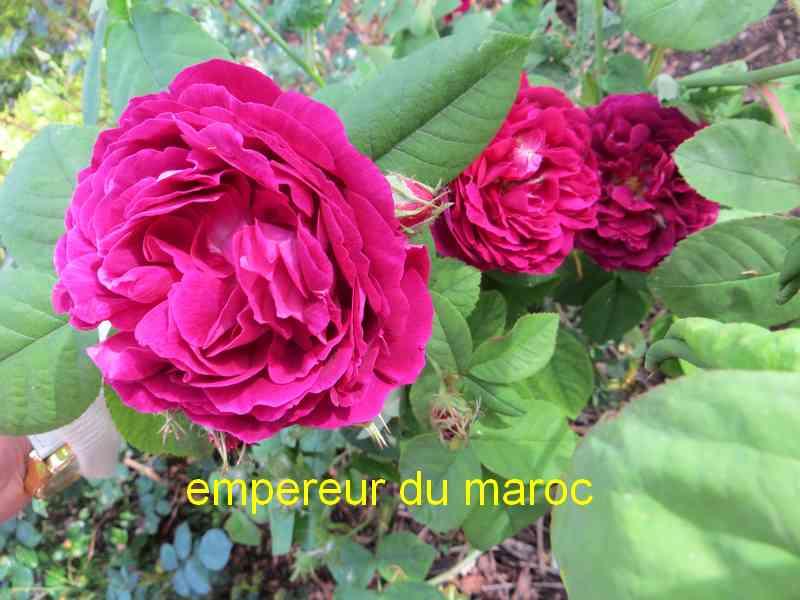 roses en vrac - Page 4 Img_4836