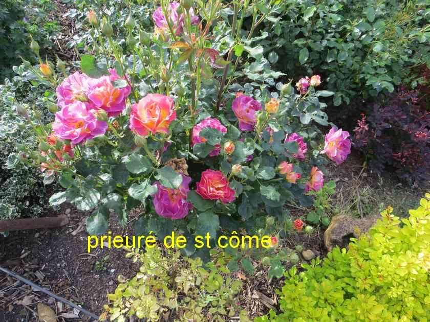roses en vrac - Page 4 Img_4838