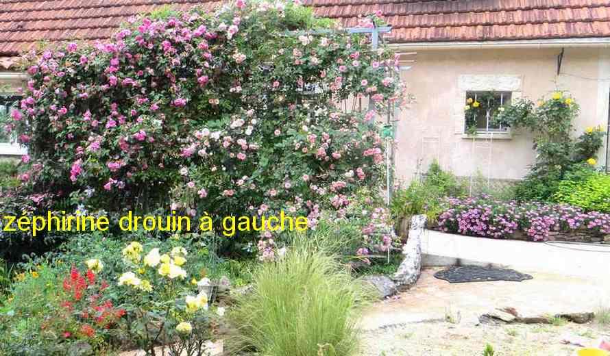 roses en vrac - Page 9 Img_4851