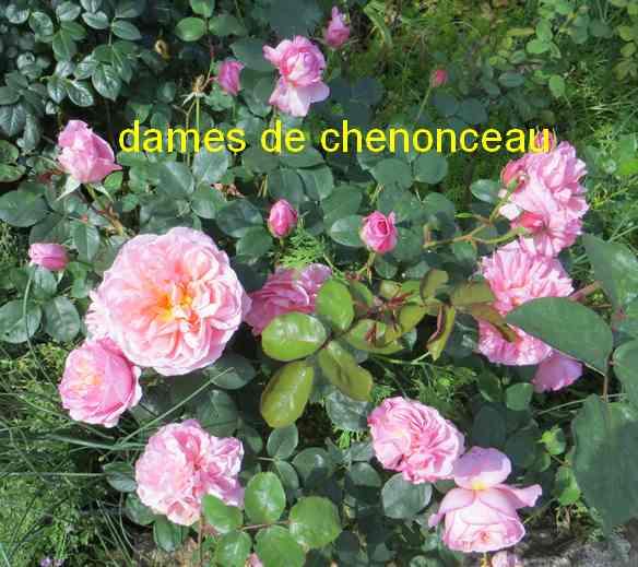 roses en vrac - Page 5 Img_4915