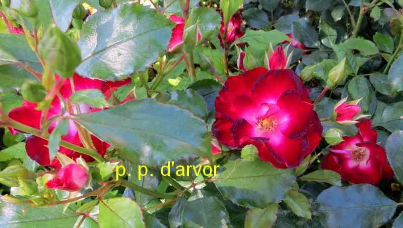 roses en vrac - Page 5 Img_4919