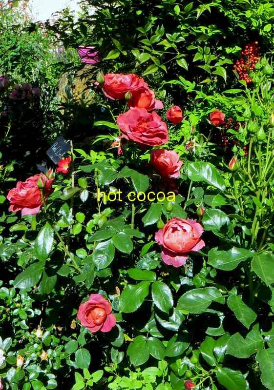 roses en vrac - Page 5 Img_4920