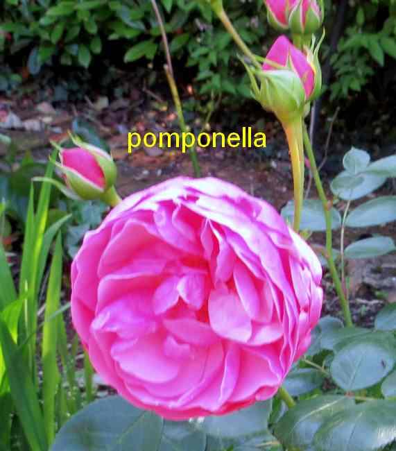 roses en vrac - Page 5 Img_4921