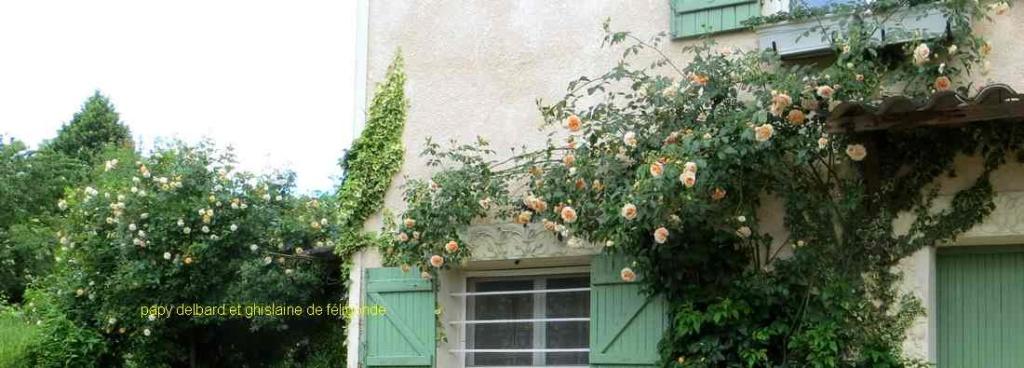 roses en vrac - Page 9 Img_4923