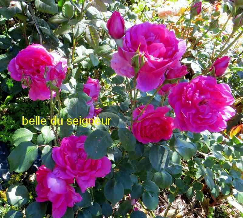 roses en vrac - Page 5 Img_5010