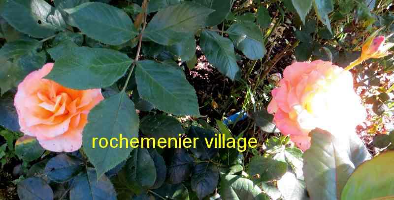 roses en vrac - Page 5 Img_5011