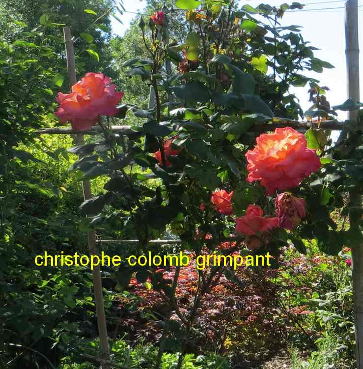 roses en vrac - Page 5 Img_5016