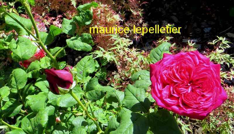 roses en vrac - Page 5 Img_5017
