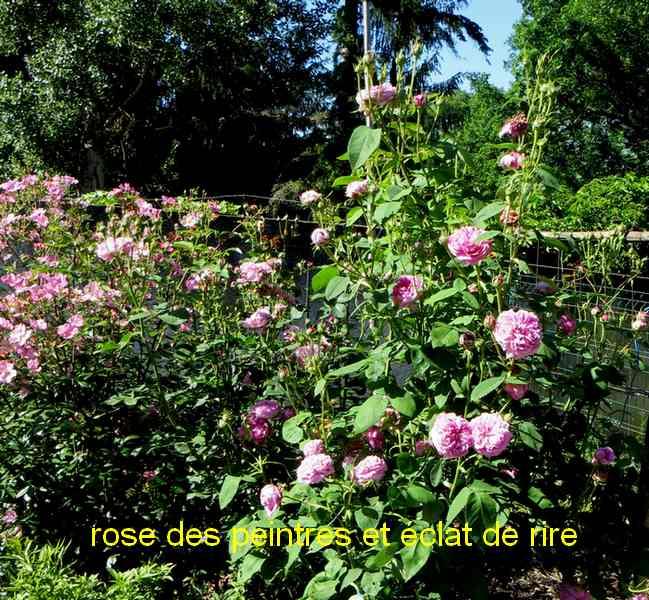 roses en vrac - Page 5 Img_5021