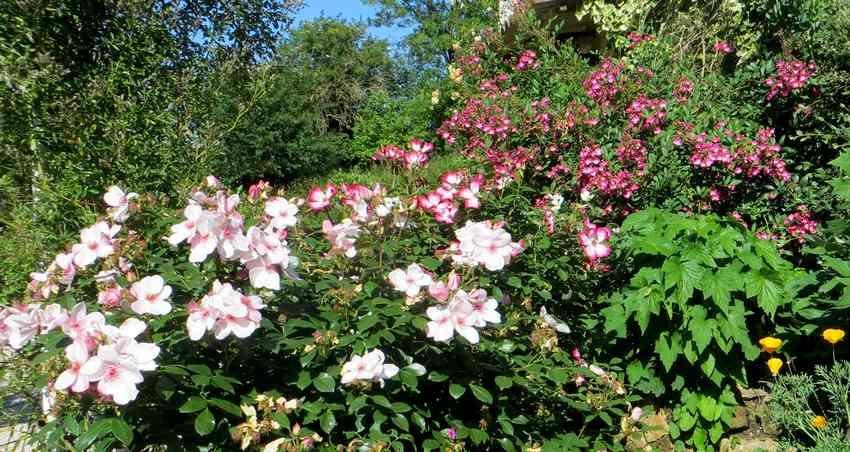roses en vrac - Page 5 Img_5022