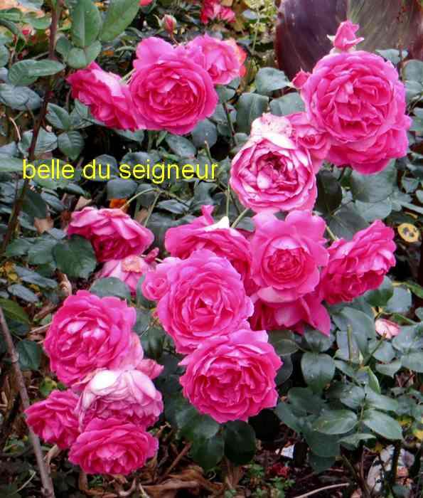 roses en vrac - Page 6 Img_5030