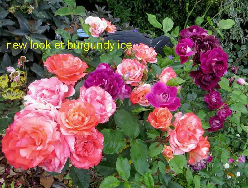 roses en vrac - Page 6 Img_5033