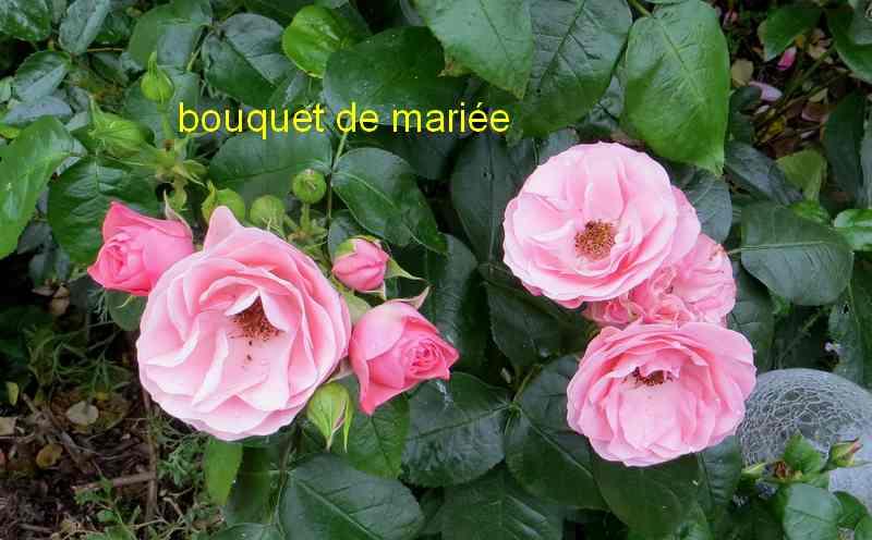 roses en vrac - Page 6 Img_5040