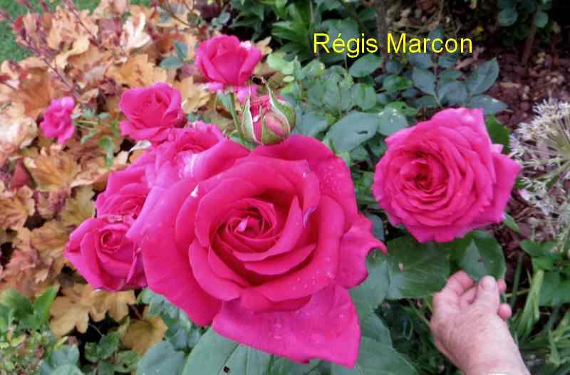 roses en vrac - Page 6 Img_5043