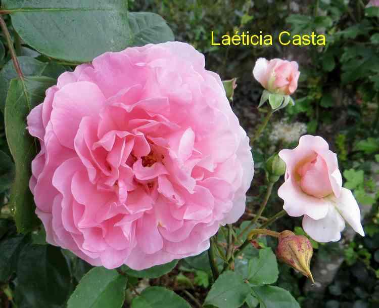 roses en vrac - Page 6 Img_5045