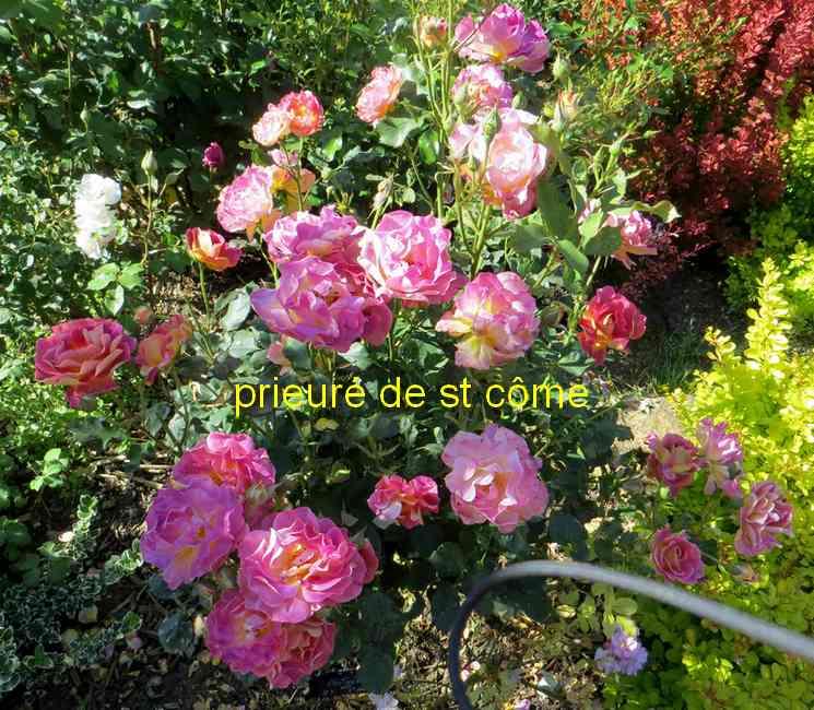 roses en vrac - Page 9 Img_5047