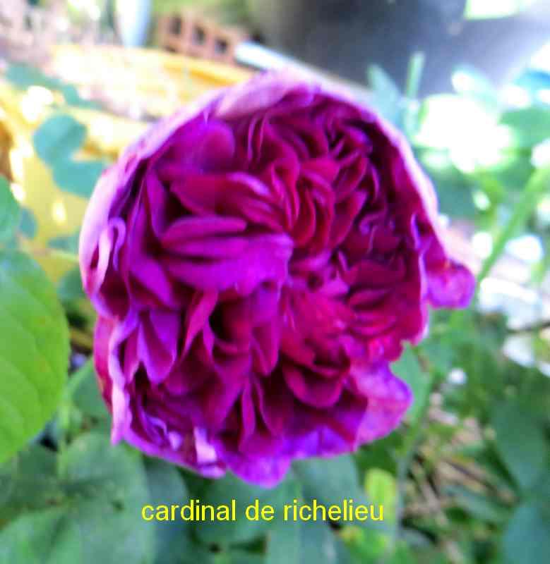 roses en vrac - Page 9 Img_5051