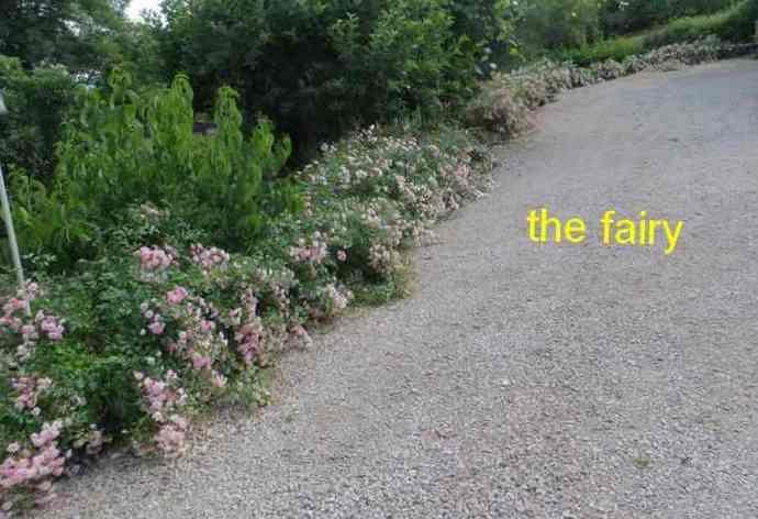 roses en vrac - Page 6 Img_5124