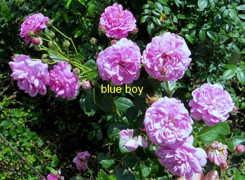 roses en vrac - Page 8 Img_5224