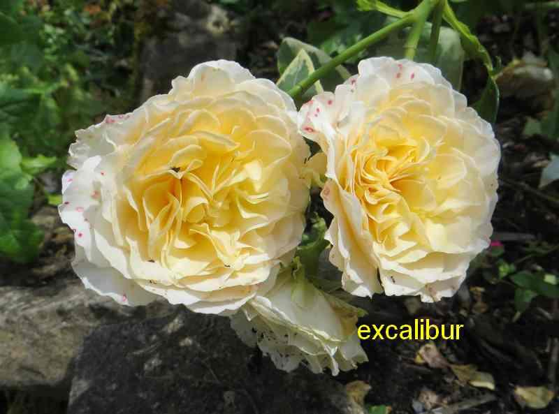 roses en vrac - Page 8 Img_5226