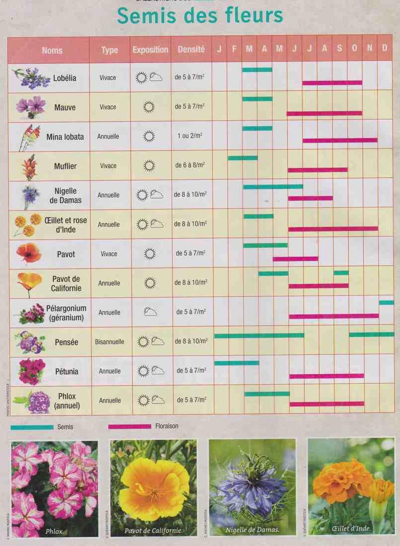 semis de fleurs K210