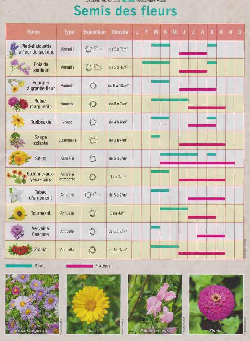 semis de fleurs K310