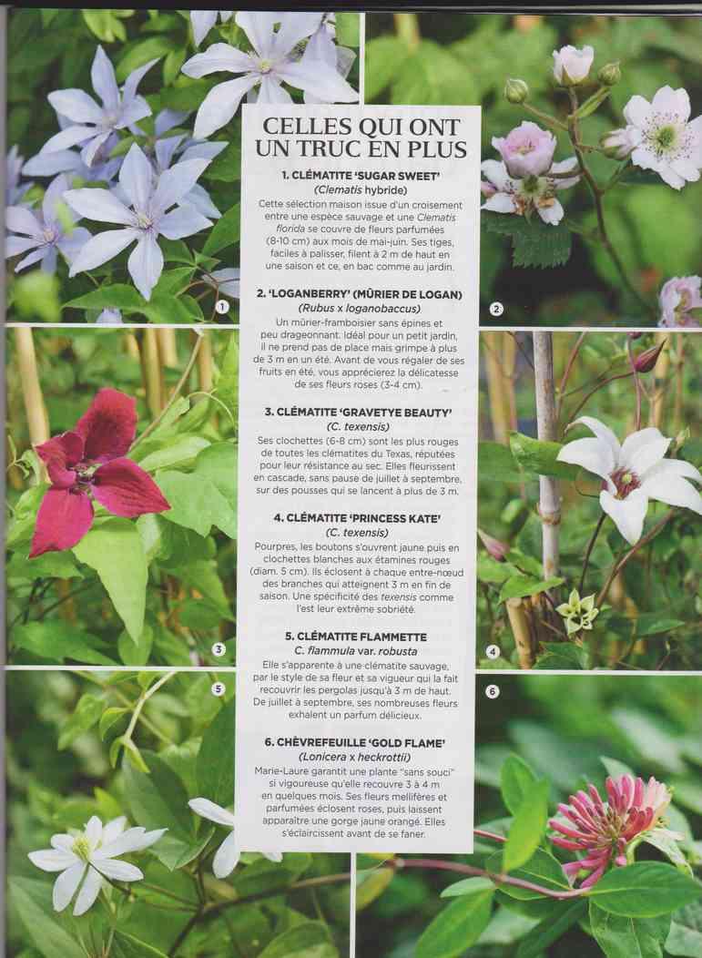 préparer le printemps - Page 2 M1110