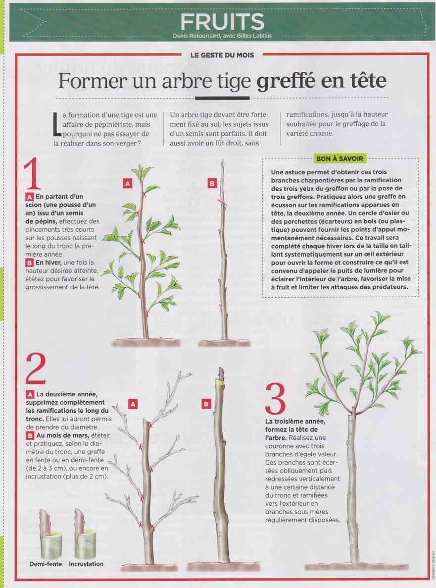 préparer le printemps - Page 2 M115