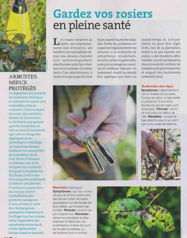 préparer le printemps - Page 2 M1211