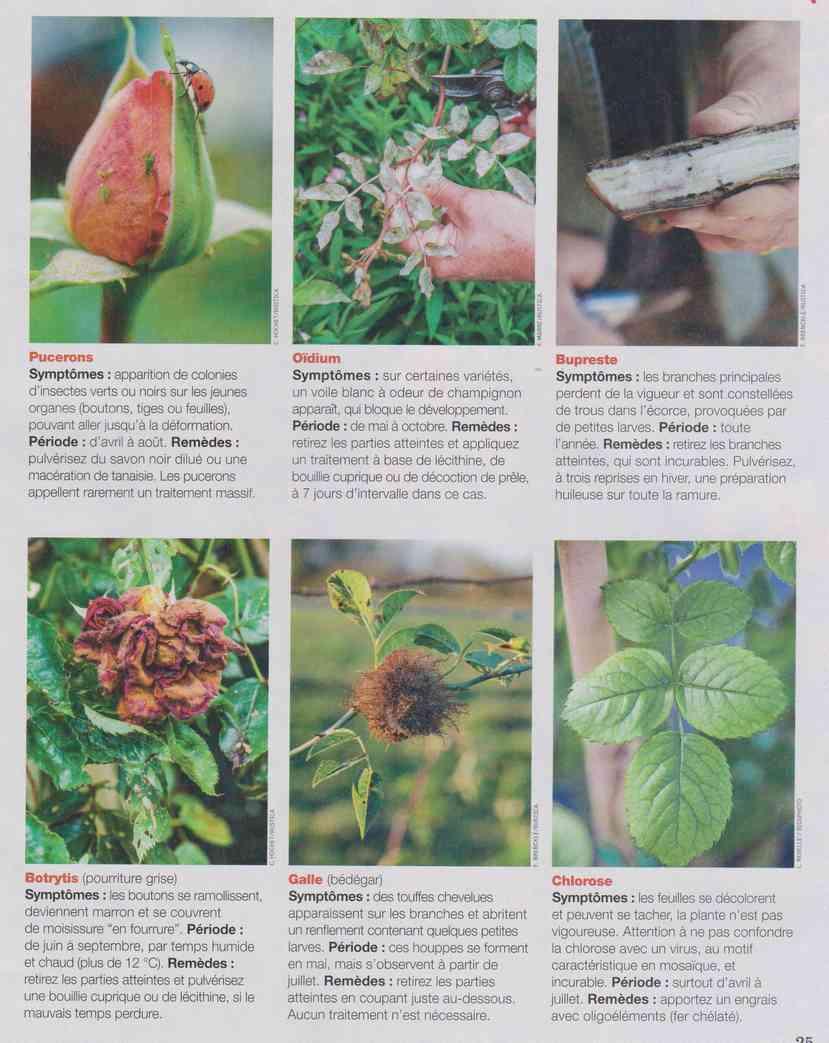 préparer le printemps - Page 2 M1310