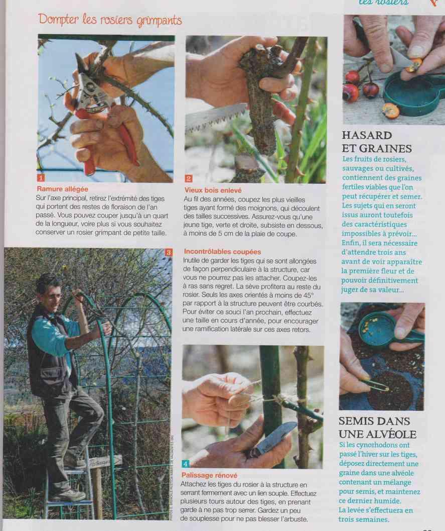 préparer le printemps - Page 2 M1510