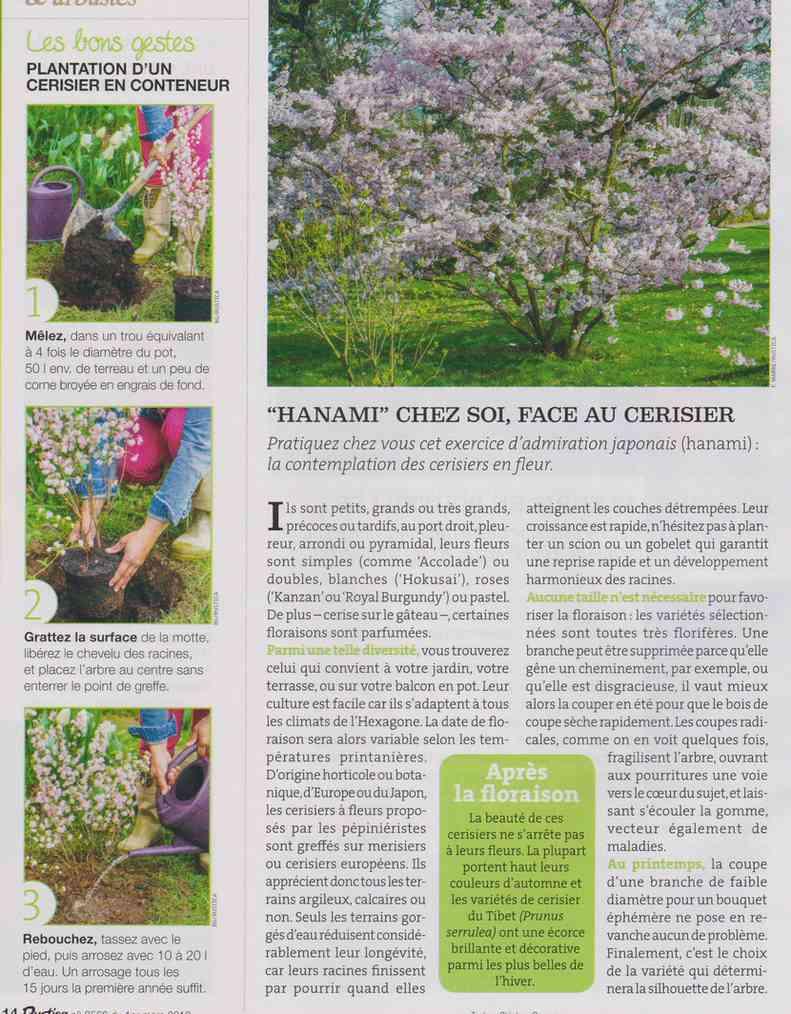préparer le printemps - Page 3 M2110