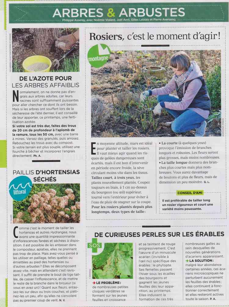 préparer le printemps - Page 2 M611