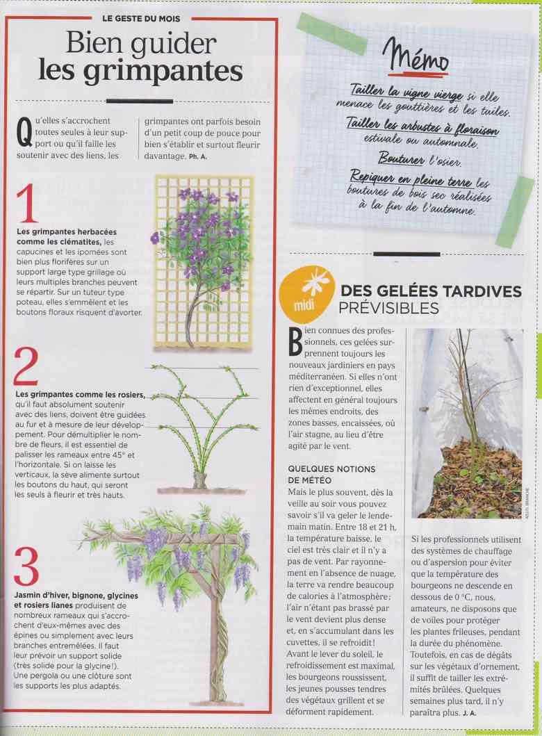 préparer le printemps - Page 2 M711