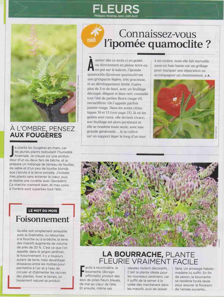 préparer le printemps - Page 2 M811