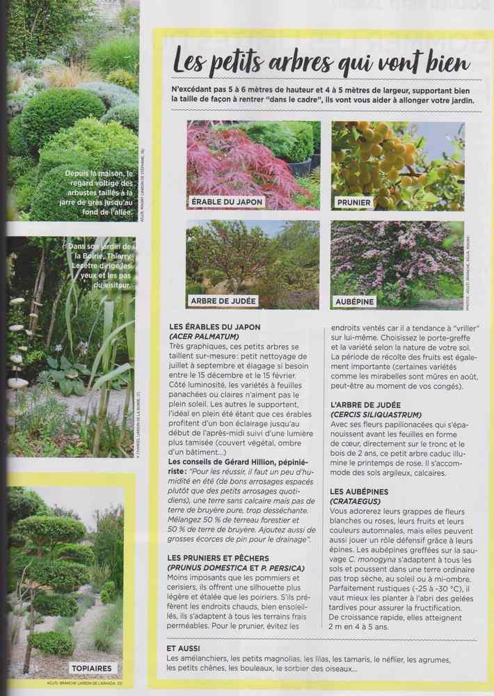 au jardin - Page 10 Petits12