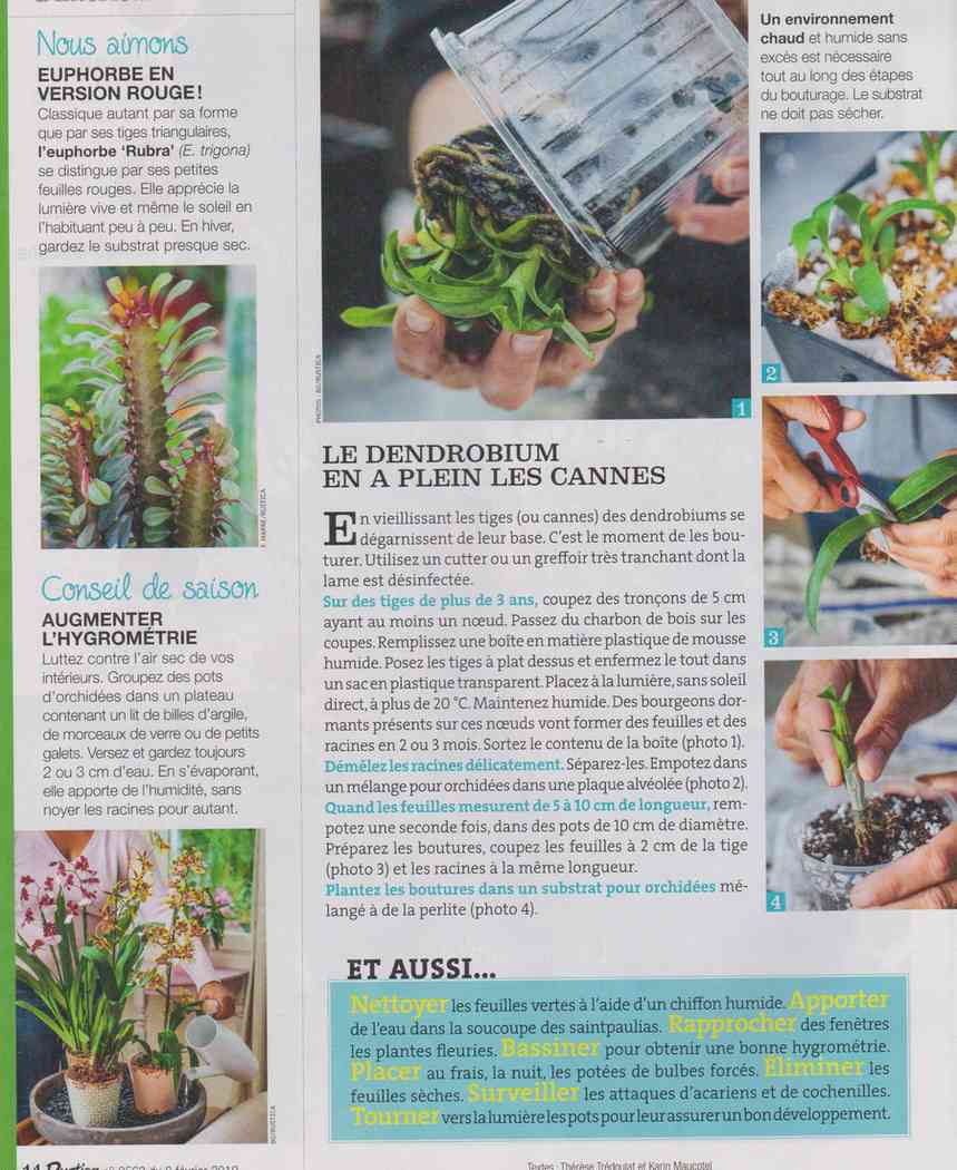 préparer le printemps - Page 3 Q411