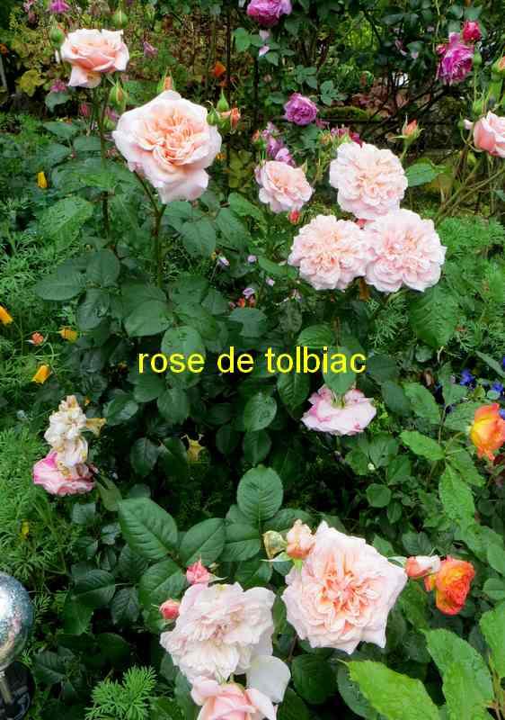 roses en vrac - Page 10 Rose_d20